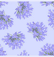 blue purple agapanthus on light purple background vector image vector image