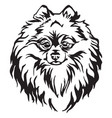 decorative portrait dog pomeranian spitz vector image