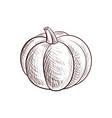 drawing pumpkin vector image vector image