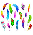 feather fluffy feathering quil and colorful vector image