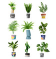 home plants icon set vector image