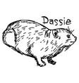 dassie or rock hyrax vector image