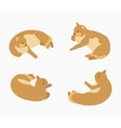 Isometric red lying cat vector image vector image