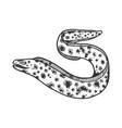 muraena sea animal sketch engraving vector image vector image