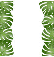 philodendron monstera leaf border vector image vector image