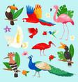 tropical birds exotic parrot or flamingo vector image vector image