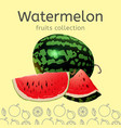 watermelon image vector image vector image