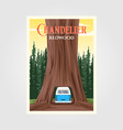 chandelier tree with bus on redwood national park vector image vector image