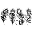 exotic bird feathers vector image vector image