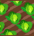 pattern with cabbages growing on beds vector image vector image