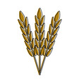 wheat harvest food vector image