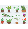 House Plants vector image vector image