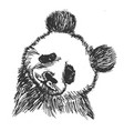 panda symbol of china vector image vector image