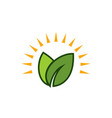 sun green leaf logo vector image vector image
