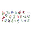 collection of popular floristic flowers and vector image vector image