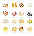 seeds and grains isolated icons organic cereal vector image vector image