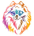 colorful decorative portrait of dog pomeranian vector image vector image