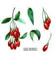 goji berries with leaves hand drawn watercolor vector image vector image