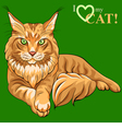 Maine Coon cat vector image vector image