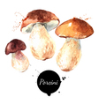 Watercolor hand drawn wild forest mushrooms vector image vector image
