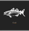 cod on black background fish vector image vector image