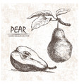 Digital detailed pear hand drawn