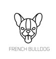 dog breed linear icon french bulldog tongue out vector image vector image