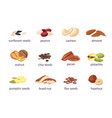 nuts and seeds hazelnut almond walnut vector image