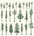 Set of stylized pine silhouettes vector image