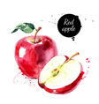 Watercolor hand drawn red apple Isolated eco vector image vector image