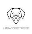 labrador retriever tongue out dog breed linear vector image