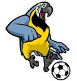 macaw bird playing soccer vector image vector image
