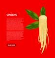 realistic detailed 3d ginseng root and leaves card vector image