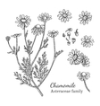 Ink chamomile hand drawn sketch vector image vector image