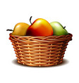 red and green ripe apples in basket vector image