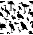 seamless pattern various kinds of birds vector image vector image
