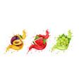 set fruit juice splash grapes watermelon vector image