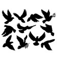 pigeon or dove birds hold olive branch silhouettes vector image