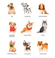 cute dogs furry human friends home animals
