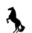 silhouette of rearing up horse on white background vector image vector image