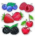 sweet berries vector image vector image