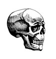 skull man sketch vector image