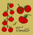 colorful hand drawn set of tomatoes vector image vector image