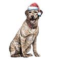 Labrador Retriever 06 vector image vector image
