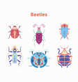set drawn beautiful beetles vector image