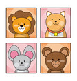 set cute baby animal nature life vector image