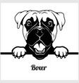 boxer - peeking dogs - - breed face head isolated vector image vector image
