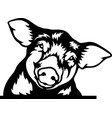 peeking pig - funny farm animals out vector image vector image