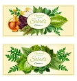 Salad greens and vegetable leaves banners set vector image vector image