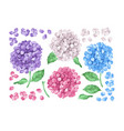 set collection lilac hydrangea flowers leaves vector image vector image